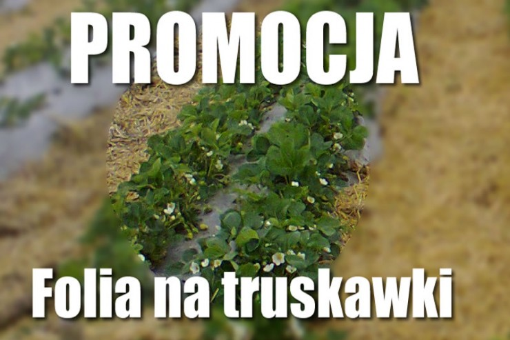 folia_na_truskawki