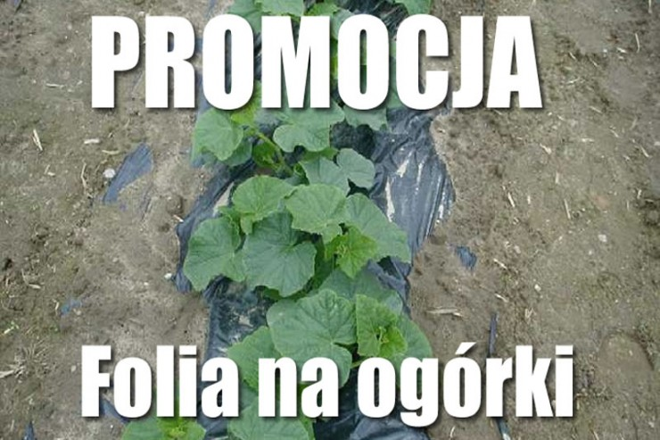 promocja_ogorki